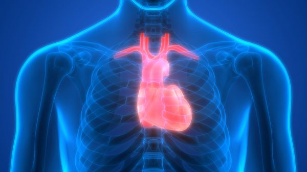 Cardiovascular Sensor